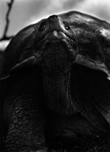 imagenes de tortugas de tierra fotos