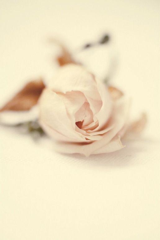 pale rosePalepink, Rose Flower, Soft Colors, Soft Pink, Pale Pink, Dusty Pink, Blushes, Pink Rose, Vintage Rose