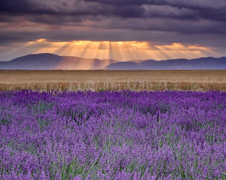 Sunbeams over Lavender by Michael Blanchette on 500px