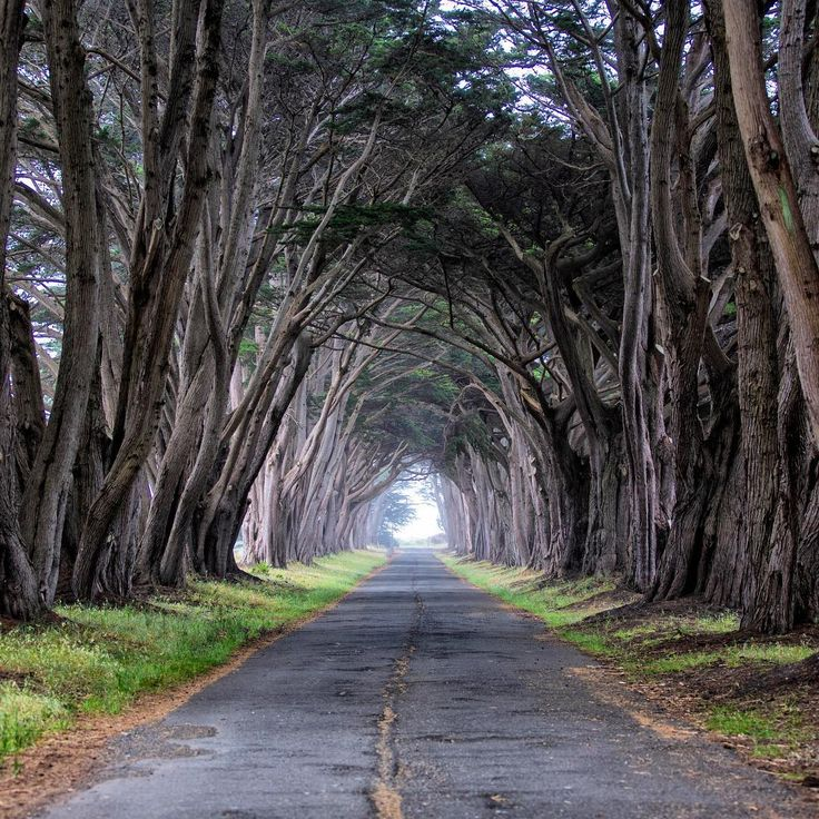 A stroll through the Monterey cypress tunnel is one of many ways to enjoy serenity and scenery at #PointReyes #NationalSeashore in #California. From rocky headlands and sand beaches that seem to stretch forever to open grasslands and forested ridges, @pointreyesnps's unique landscapes captivate visitors and provide a home for over 1,500 species of plants and animals. Photo courtesy of Brian Chan (@brianchanphotography). #usinterior #findyourpark