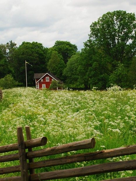 That looks quite like home with the typical gärdsgård fencing..