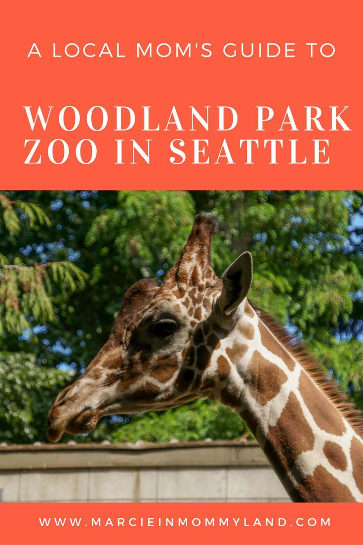 Have you met Lulu the giraffe? She's just one of several baby animals at the Woodland Park Zoo in Seattle. Find out my tips and insider tricks for enjoying a day at the zoo with your baby, toddler or kids of any age. Click to read more or pin to save for later. www.marcieinmommyland.com