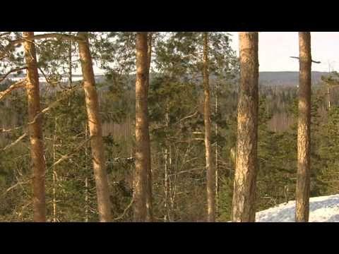 Finland wildlife - Wild Taiga forest - YouTube