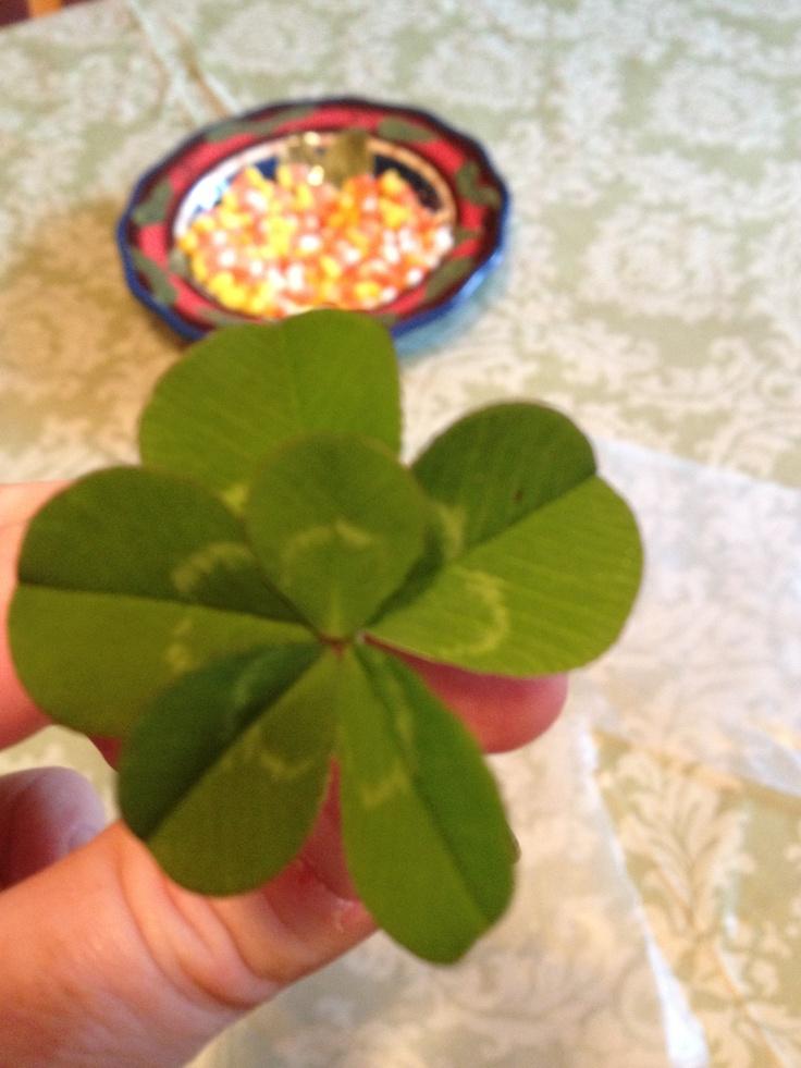 6 leaf clover