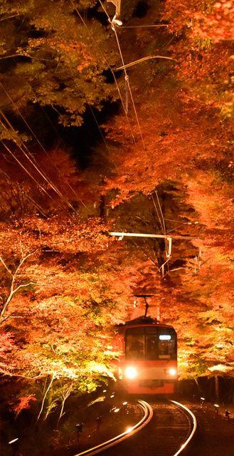 京都・洛北(らくほく)の叡山電鉄鞍馬線で、約280本の紅葉をライトアップした「もみじのトンネル」を電車がくぐり抜けている。30日まで。トンネルは市原―二ノ瀬駅間の約250メートル。電車は車内灯を消し