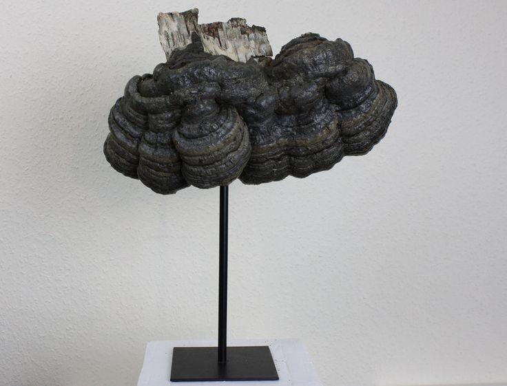Skulpturen - Holzskulptur Zunderschwamm - ein Designerstück von Skulptur-und-Bild bei DaWanda