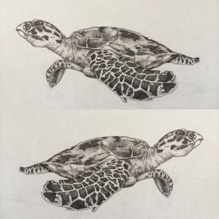 A5 hawksbill turtle drawing in pencil