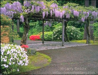 I must have a wisteria arbor like this.