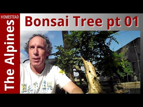 My Beginner Bonsai Tree Art (Golden Chain Tree) and Introduction to Powe...