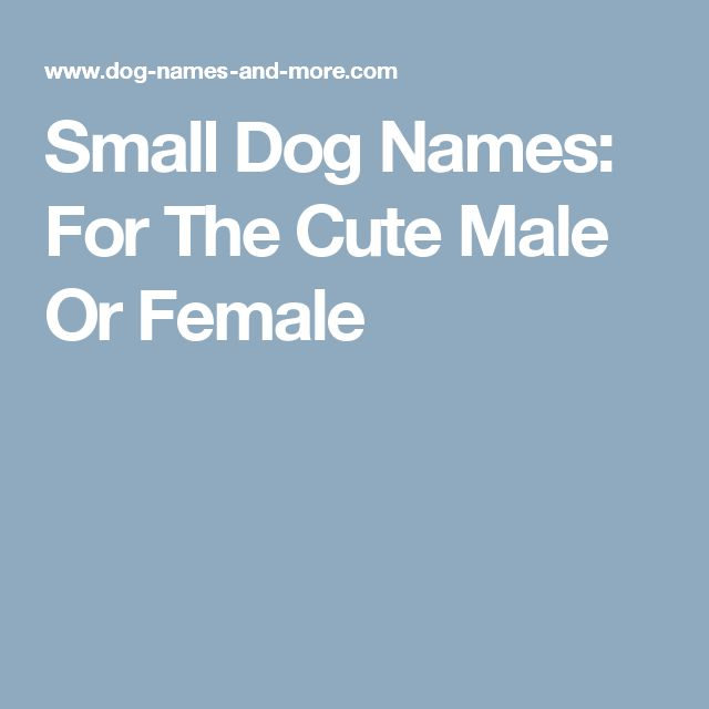 Small Dog Names: For The Cute Male Or Female