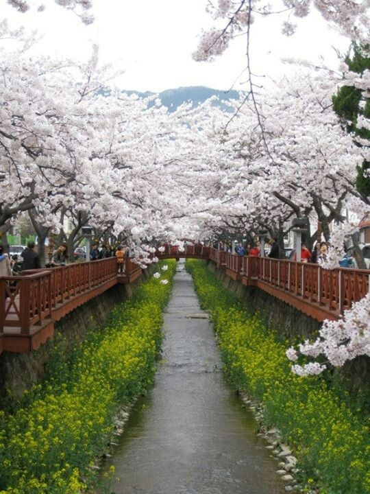 south korea a vacation destination essay Free south korea papers, essays, and research papers  thailand is an attractive destination for foreign investors -  among these countries, south korea .