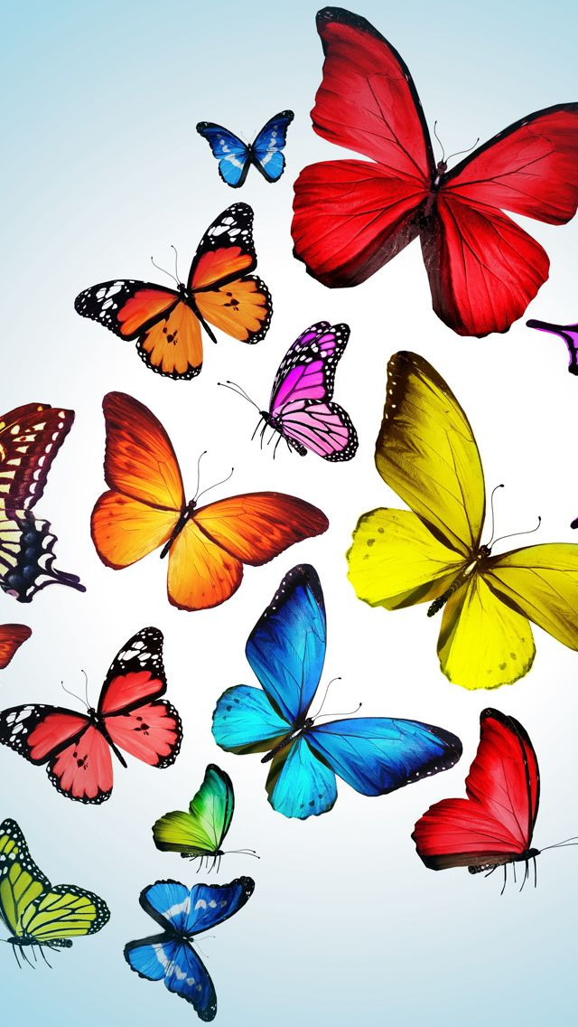 iPhone 5 Wallpapers Photo butterfly Pinterest