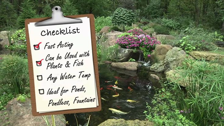 30 Best Images About Pond Maintenance Tips On Pinterest