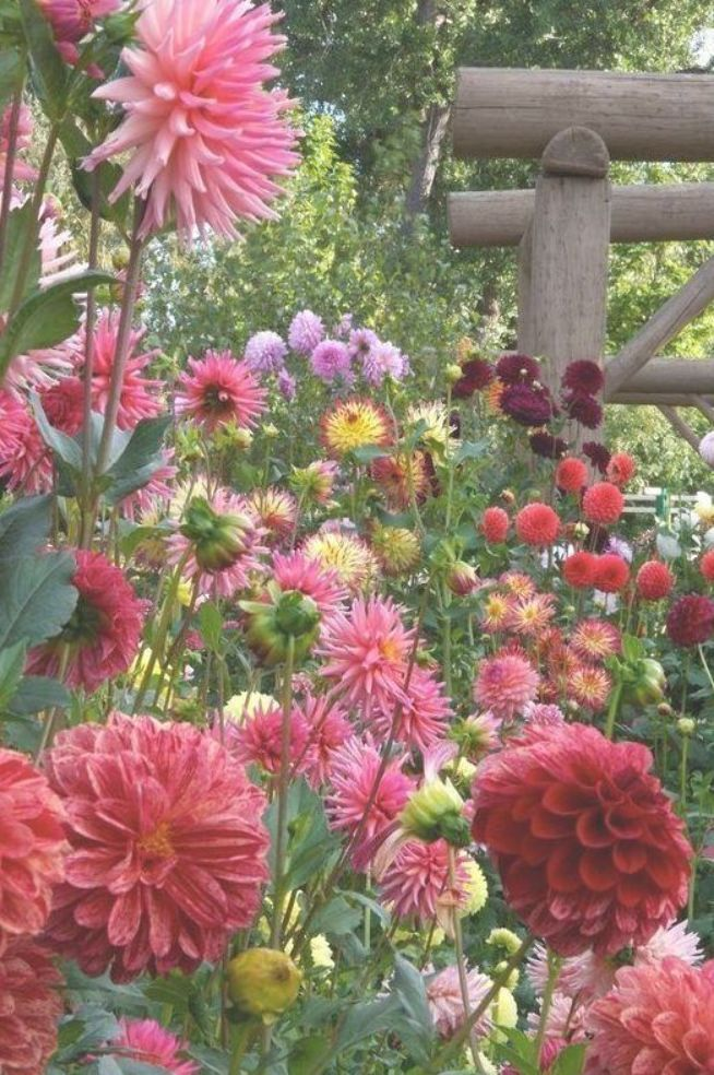 Pin By Phil Muller On Proof Of Summer Beautiful Flowers Most Beautiful Flowers Flower Pictures