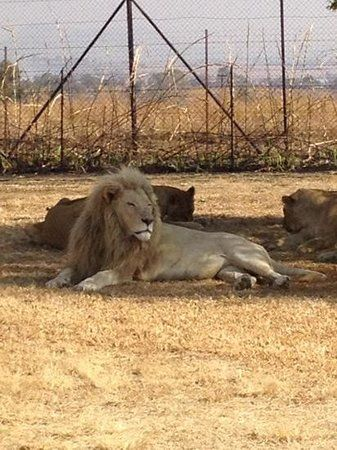 Felleng Day Tours, Johannesburg: See 517 reviews, articles, and 301 photos of Felleng Day Tours, ranked No.1 on TripAdvisor among 45 attractions in Johannesburg.