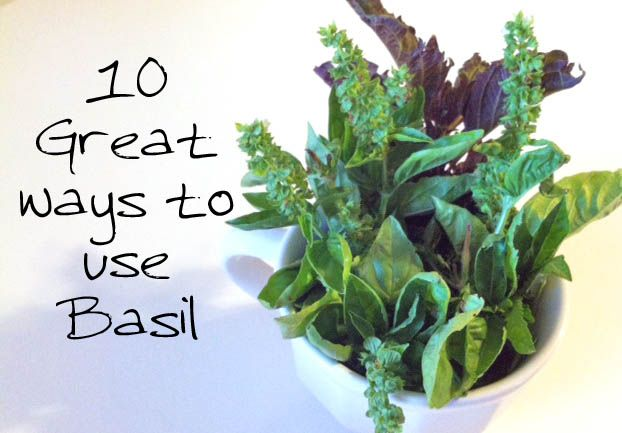10 Great Uses for Basil Leaf Herb:  besides cooking.... calming the stomach; coughing & colds; facial steam for Headache;  antibiotic properties; stings & bites; ear infections; level Blood Sugar, and stress reduction.