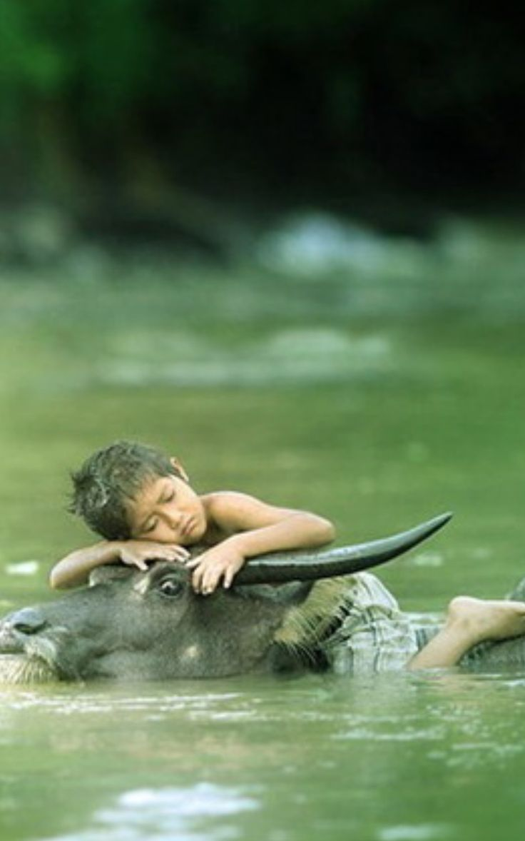 "BBC Boracay says:"" Isn't it an amazing photo to witness peace and harmony - A young boy in the Philippines falls into sleep on the back of his water buffalo here called carabao..."""
