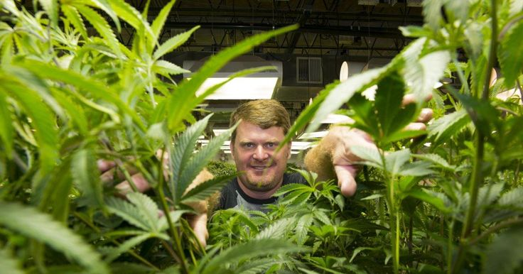 Floyd Landis launches medical marijuana business in Colorado. Yes seriously http://ift.tt/2aFyxxY Love #sport follow #sports on @cutephonecases