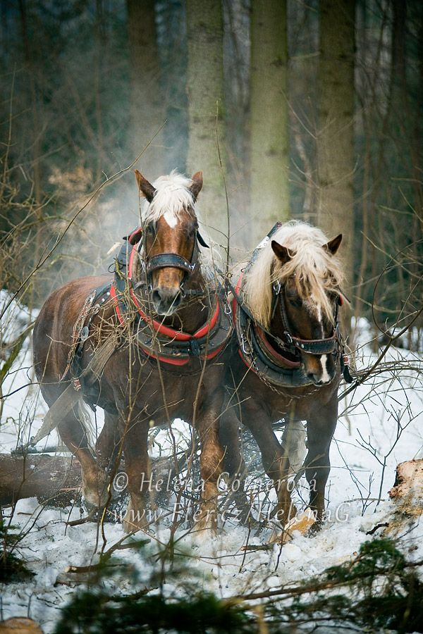 Úděl formana (FOTOPLACHTA menší) Vůně lesa a spolu s ní síla a obratnost chladnokrevných koní je poctou každého formana. Těžká, často namáhavá práce, avšak také zároveň plná víry a naděje v tato krásná zvířata. S úctou zdraví forman Milan Blizňák. (Podlesí na Valašsku, 2013) Rozměr: 60 x 40 cm. Každý jednotlivý kus tisknu v profesionální tiskárně na ...