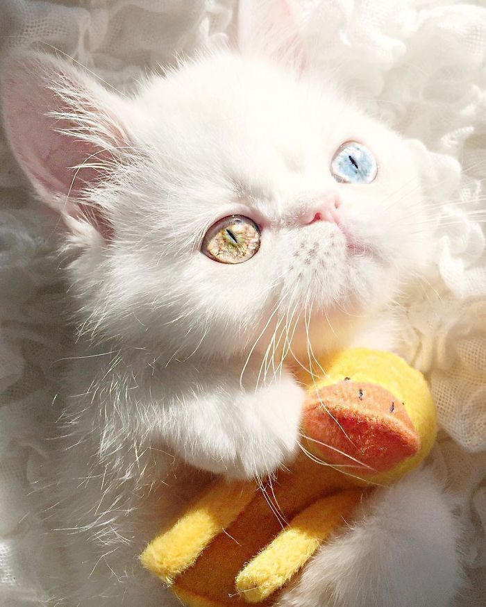 Cat was born with rare condition, is taking over the Internet with her breathtaking eyes