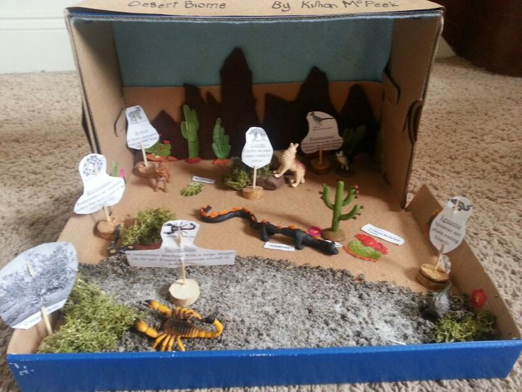 Sonoran Desert Biome shoebox Diorama