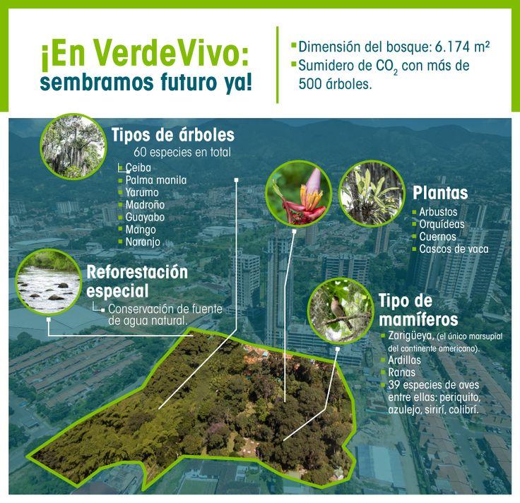 Vivienda sostenible: vivimos la diversidad del bosque VerdeVivo...#Infografía #Bosque #ViviendaSostenible #Sostenibilidad #CasasVerdes