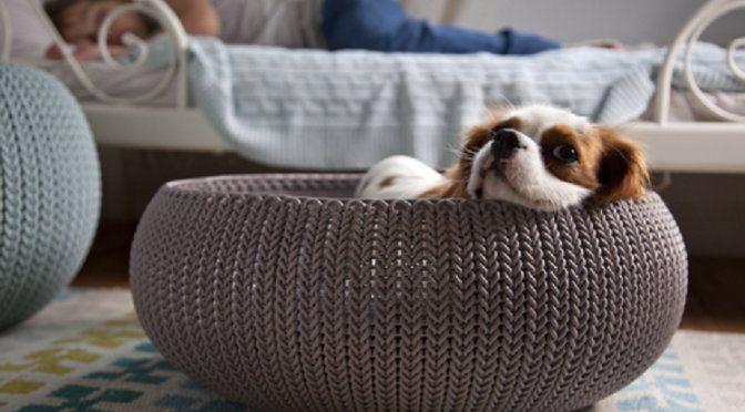 Tu #mascota también quiere #vacaciones, ¡y un lugar en el que estar más cómoda! Aprende a lograrlo en nuestro blog 🐶 #DIY #Pets #tanfácilquenotelocrees