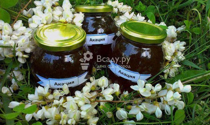 Полезное варенье или цветочный мед из акации с леденцами