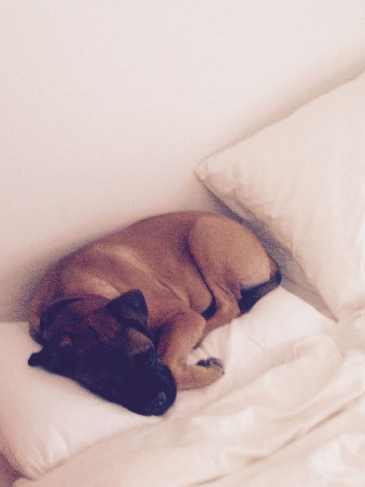 Pillow-sleeper