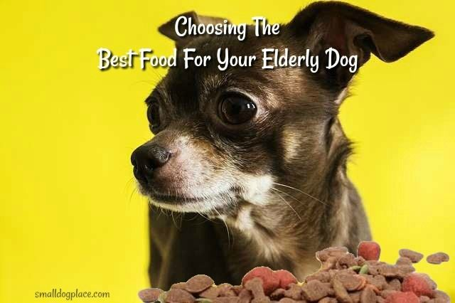 Choosing The Best Food For Your Elderly Dog Dog Dna Chihuahua