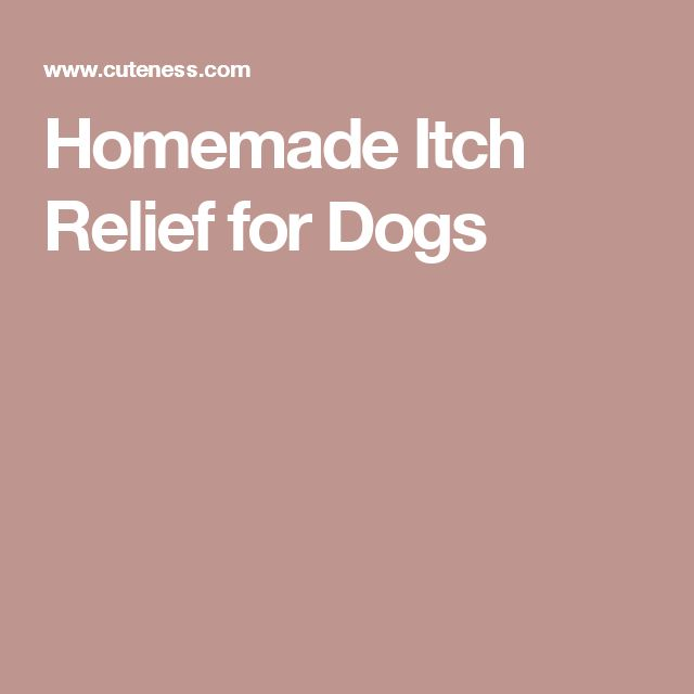 Homemade Itch Relief for Dogs
