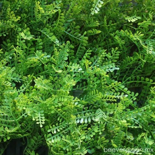 beevergreen-flores-artificiales-bruselas-roma