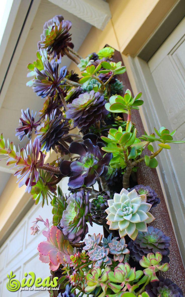 Jardn vertical de suculentas   suculentas y cactus  Pinte