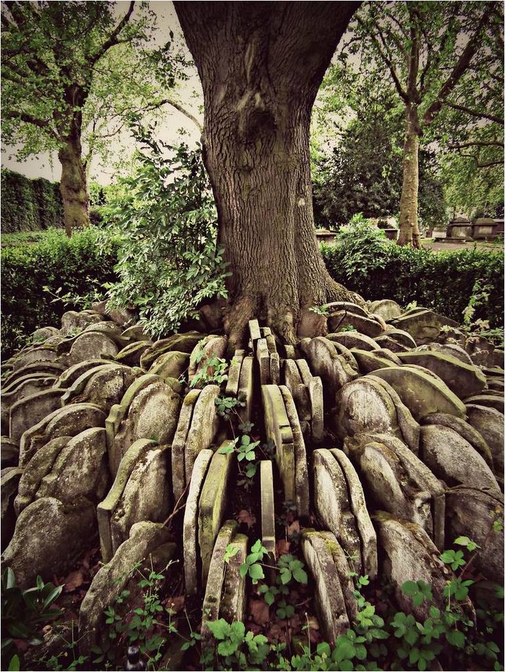 The Hardy Tree:  To make way for a new railway line in the mid-19th century, the writer Thomas Hardy (then a trainee architect) oversaw the excavation of the graveyard at St. Pancras Old Church in London. The coffins were removed and reburied elsewhere, but hundreds of headstones were placed around an ash tree in the churchyard.  The tree has since grown in amongst the stones.