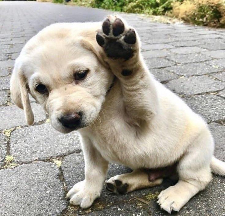"""putyouinabettermood: """"Si preguntas por ift.tt/2AKOtww, quién era un buen chico … – perros   – katzen"""
