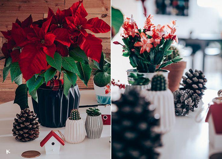 Las 25 mejores ideas sobre como cuidar cactus en pinterest - Que cuidados necesita la flor de pascua ...