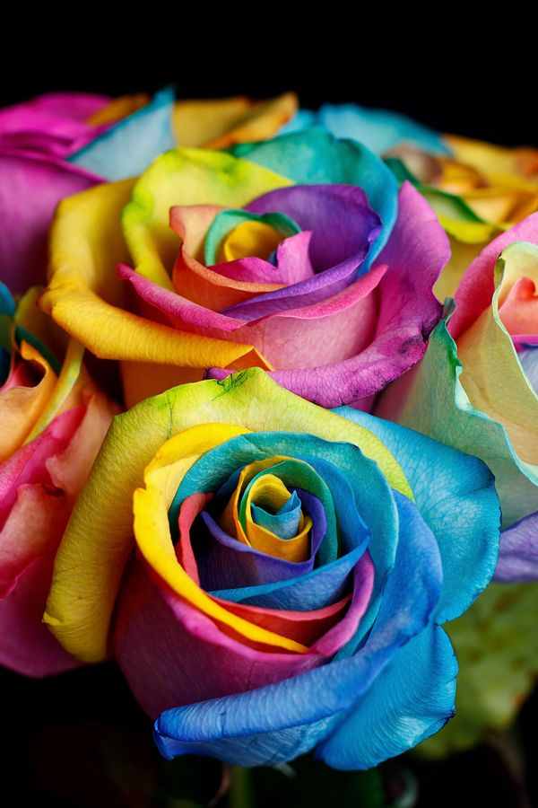 Rainbow Roses. Got them once. Gift I'll never forget.