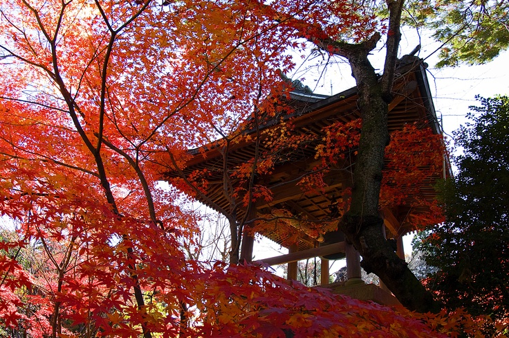red leaves, fall