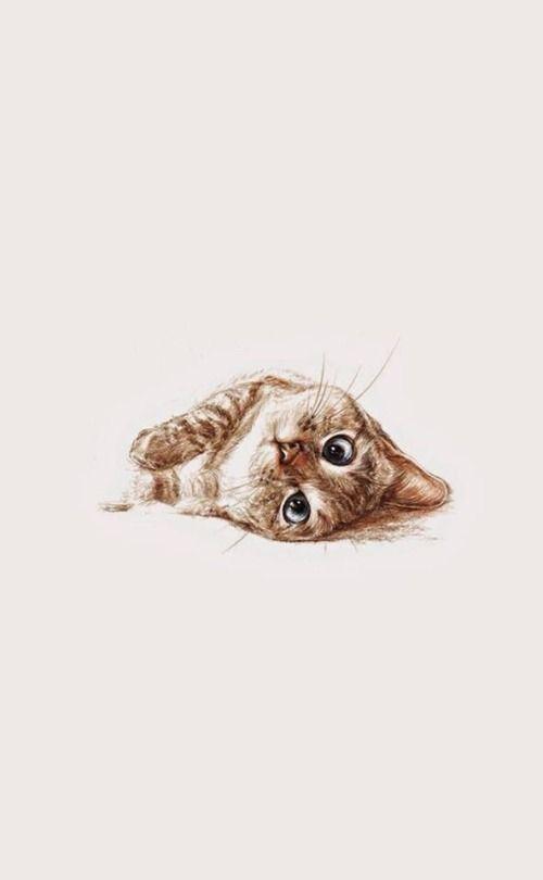 67 Trendy Ideas Wallpaper Tumblr Cat Kitty Kitten Wallpaper Cute Cat Wallpaper Kittens Cutest