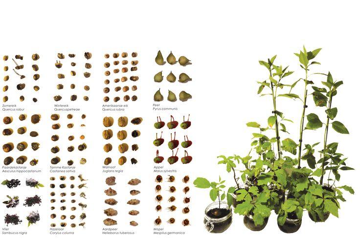 Go nuts ! In het scharrelbos staan gebiedseigen soorten als zomereik en berk die worden aangevuld met walnoot, hazelaar, kastanje, peer en vlier. Inge Vleemingh