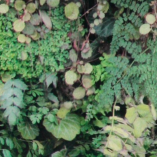 Baumwolle, gebürstet, grüne Blätter