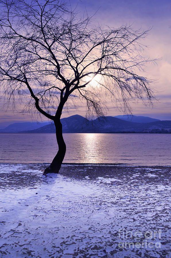 arbre en hivers