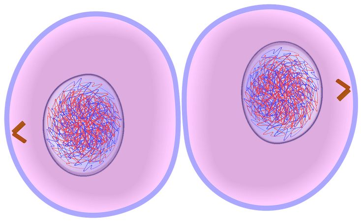 Cytokinesis: The process that follows the last stage of ...