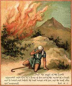 imagenes de zarza ardiendo   ... supuesto partiendo de la juguetona base de que realmente ocurrieron