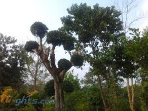 Diphu – A Spectacular Place around Assam