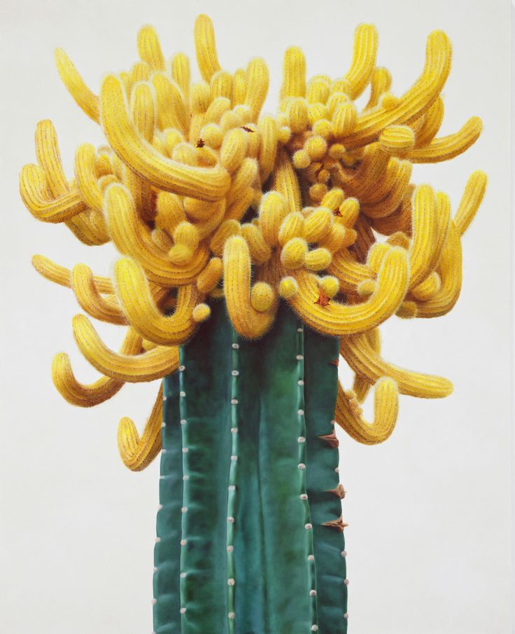 Hyper-realistic Cactus Paintings that Bristle with Detail by Kwang-Ho Lee