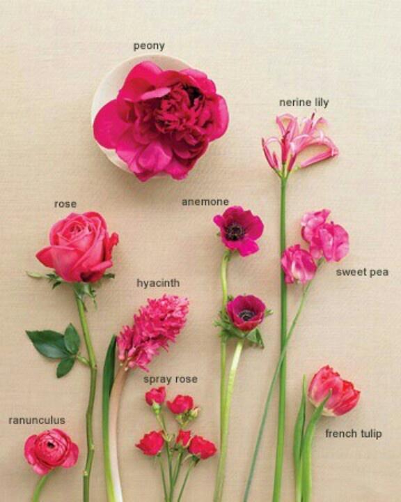 Wedding Flowers Names: 12 Best Beautiful Flower Names Images On Pinterest