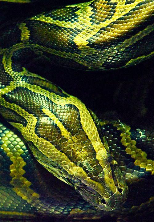 For those who have never handled them, snakes are NOT slimy, but they have gorgeous patterns!