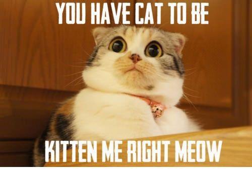 funny cat memes | funny cat scared meme pun