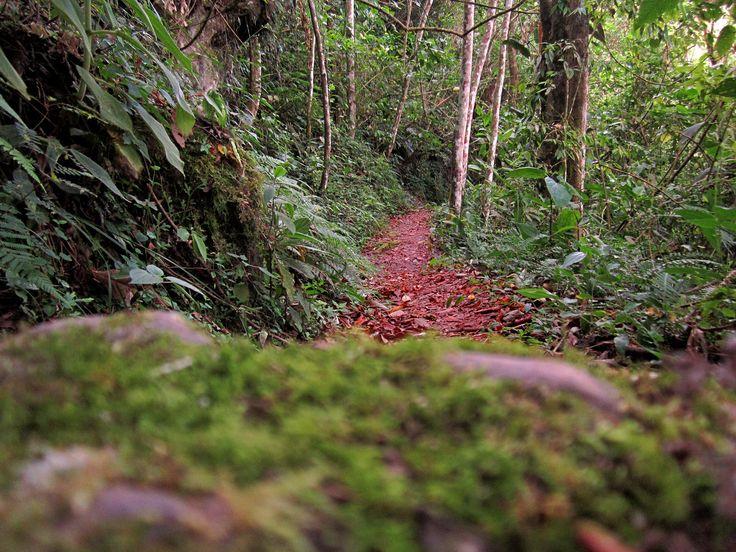 camino de la felicidad peñas blancas quindio, colombia